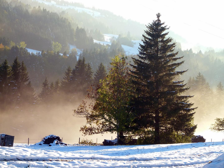 Schneelandschaft im Allgäu