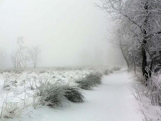Schneelandschaft im Hohen Venn