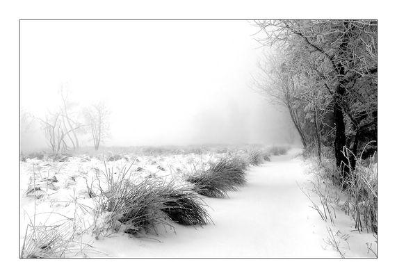Schneelandschaft im Hohen Venn [Reload]