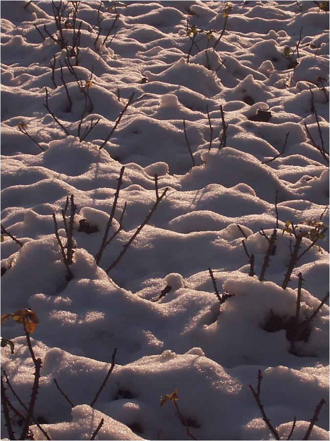 Schneelandschaften