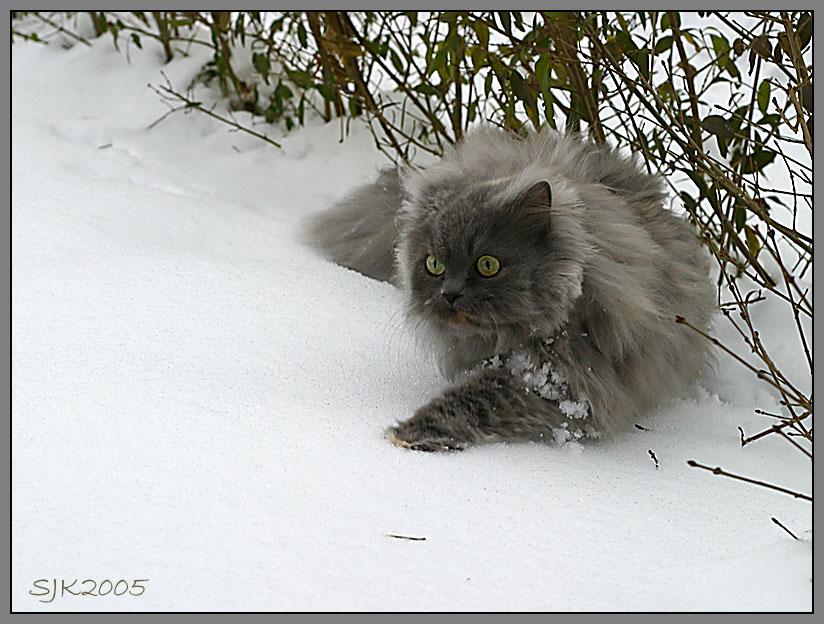 Schneeleopard III