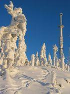 Schneemonster