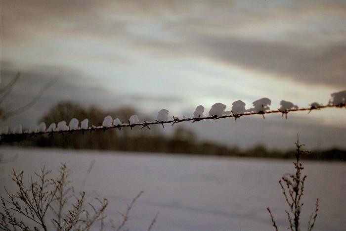 Schneemützchen