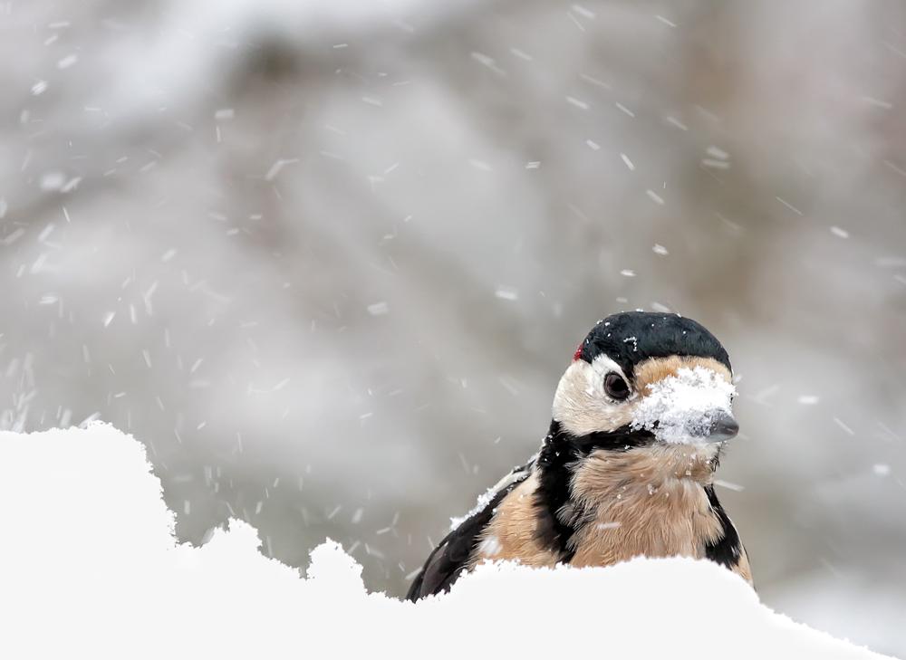 Schneenase