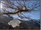 Schneenester