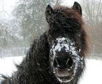 Schneepferdchen :-)