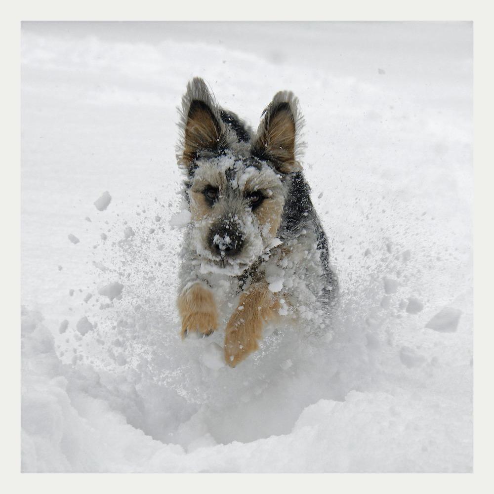 Schneepflug...