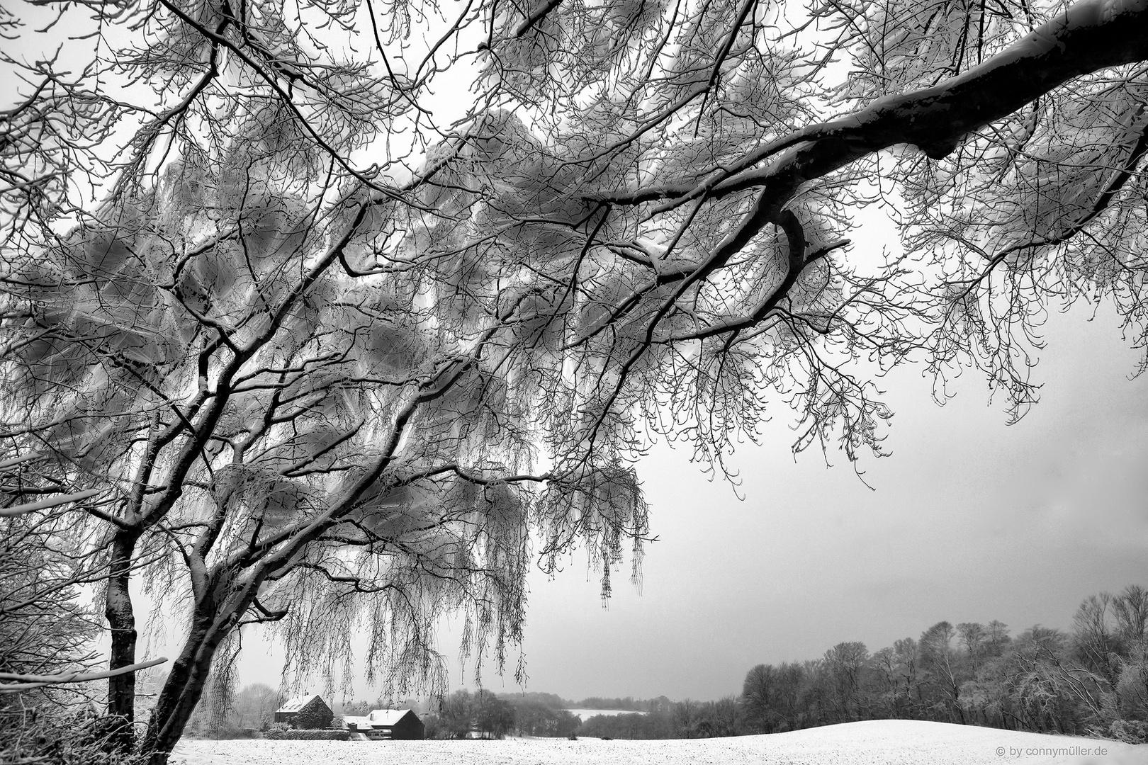 Schneepollen