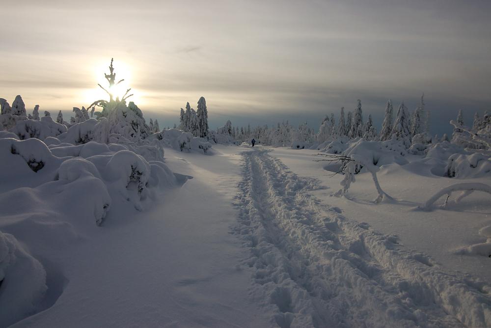 Schneeschuhwandern im Nordschwarzwald