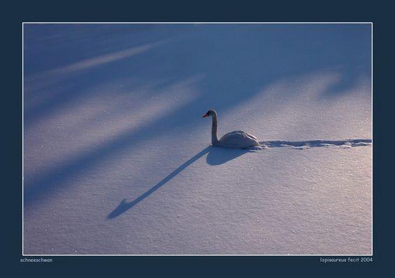 schneeschwan
