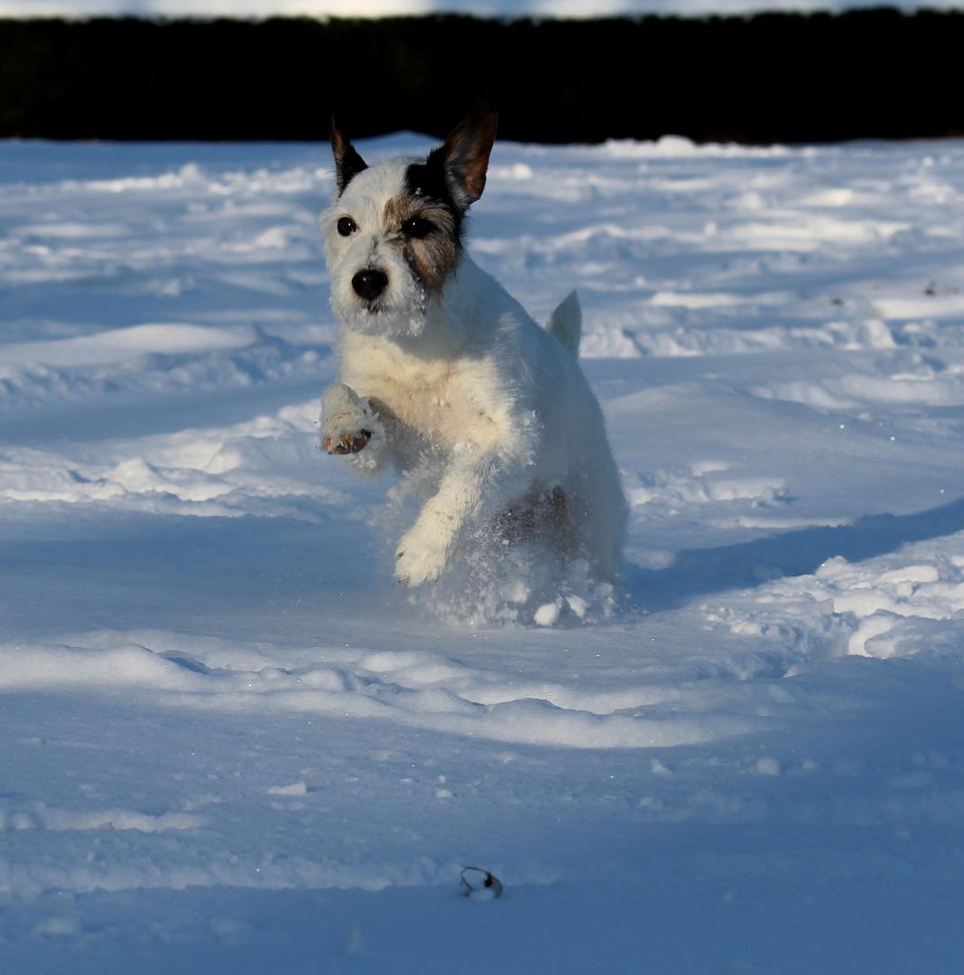 Schneespaß!