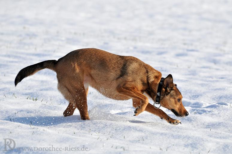Schneespaß mit Ena