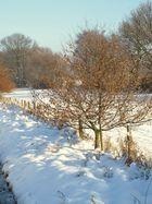 Schneespaziergang 1