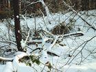 Schneespaziergang 3