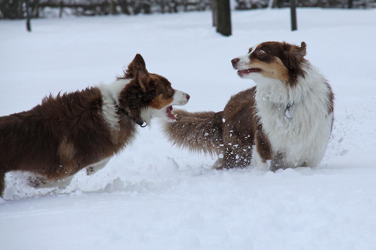 Schneespiele...