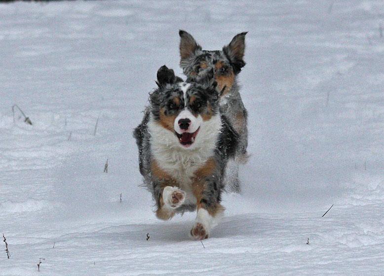 - Schneesprint -