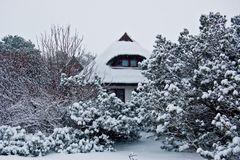 Schneesturm in der Heide von der Insel Hiddensee