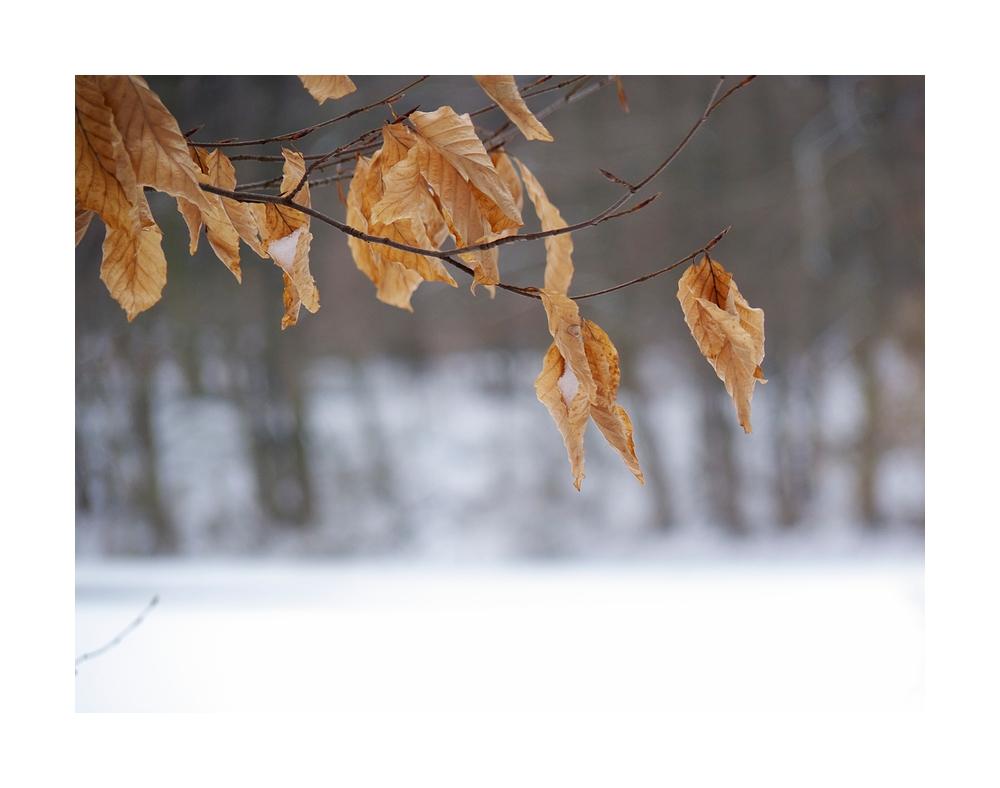 Schneetage VI