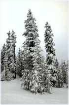SchneeTannen;Berner Oberland;BE;CH