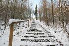 Schneetreppe im Wald.....