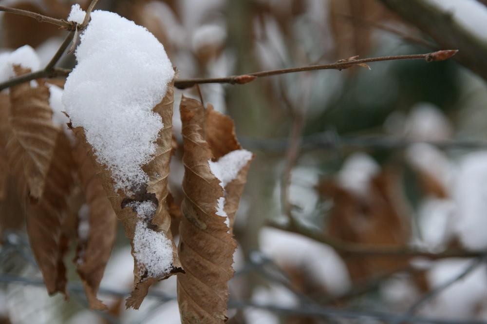 Schneetüte