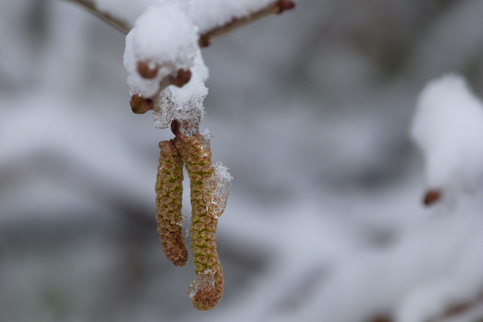 Schneeverziert