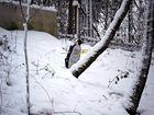Schneevogel