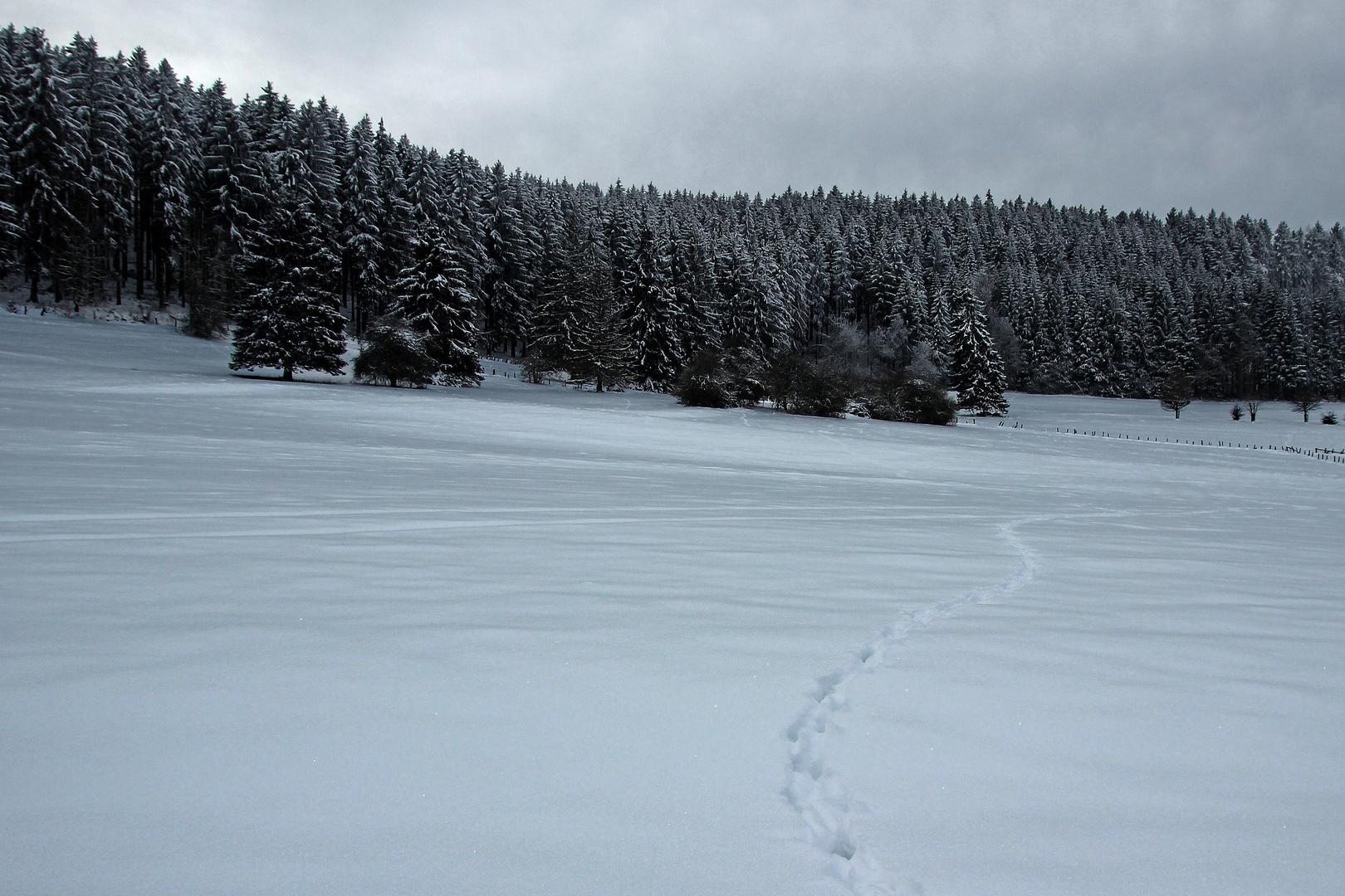 Schneewelt 2013 Brilon