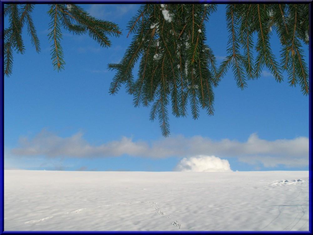 Schneewölkchen