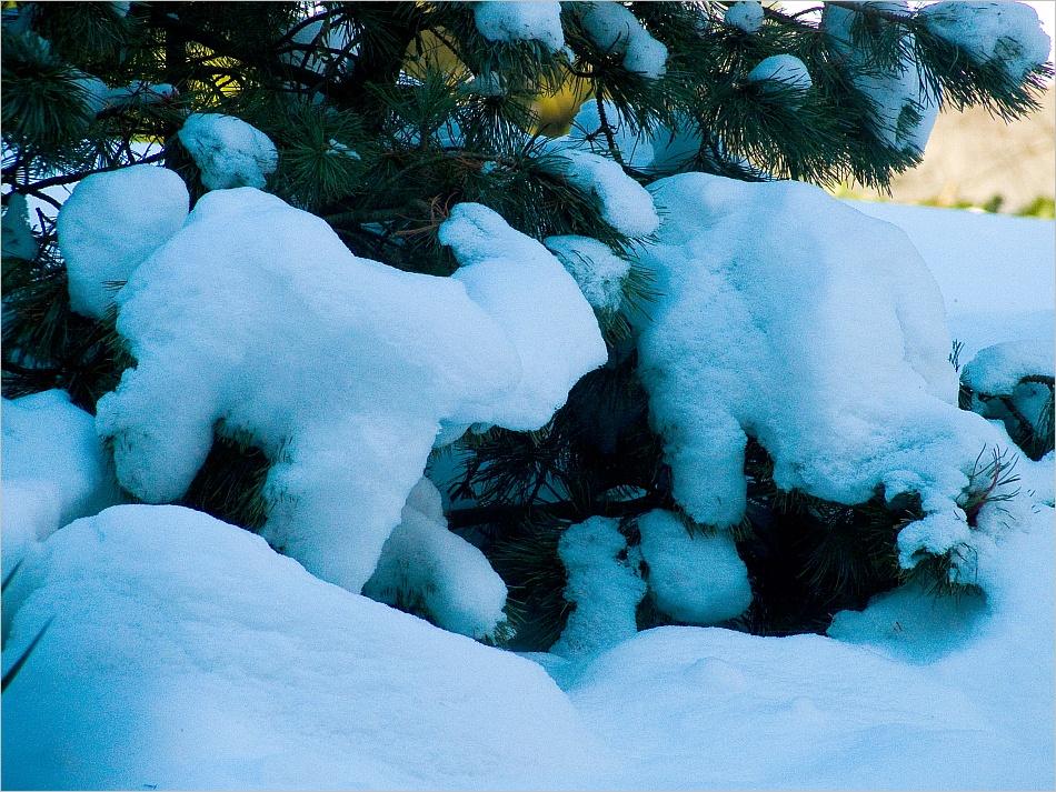 Schneeziegen