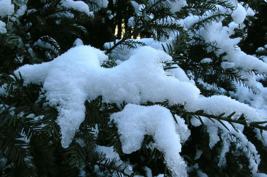 Schneezweig!