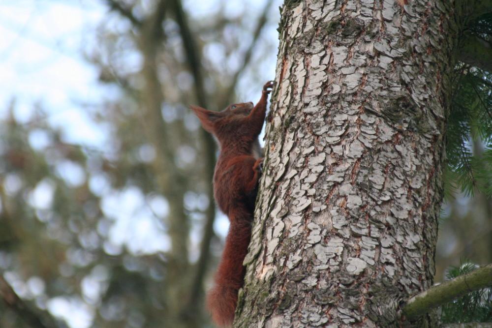 schnell auf den Baum