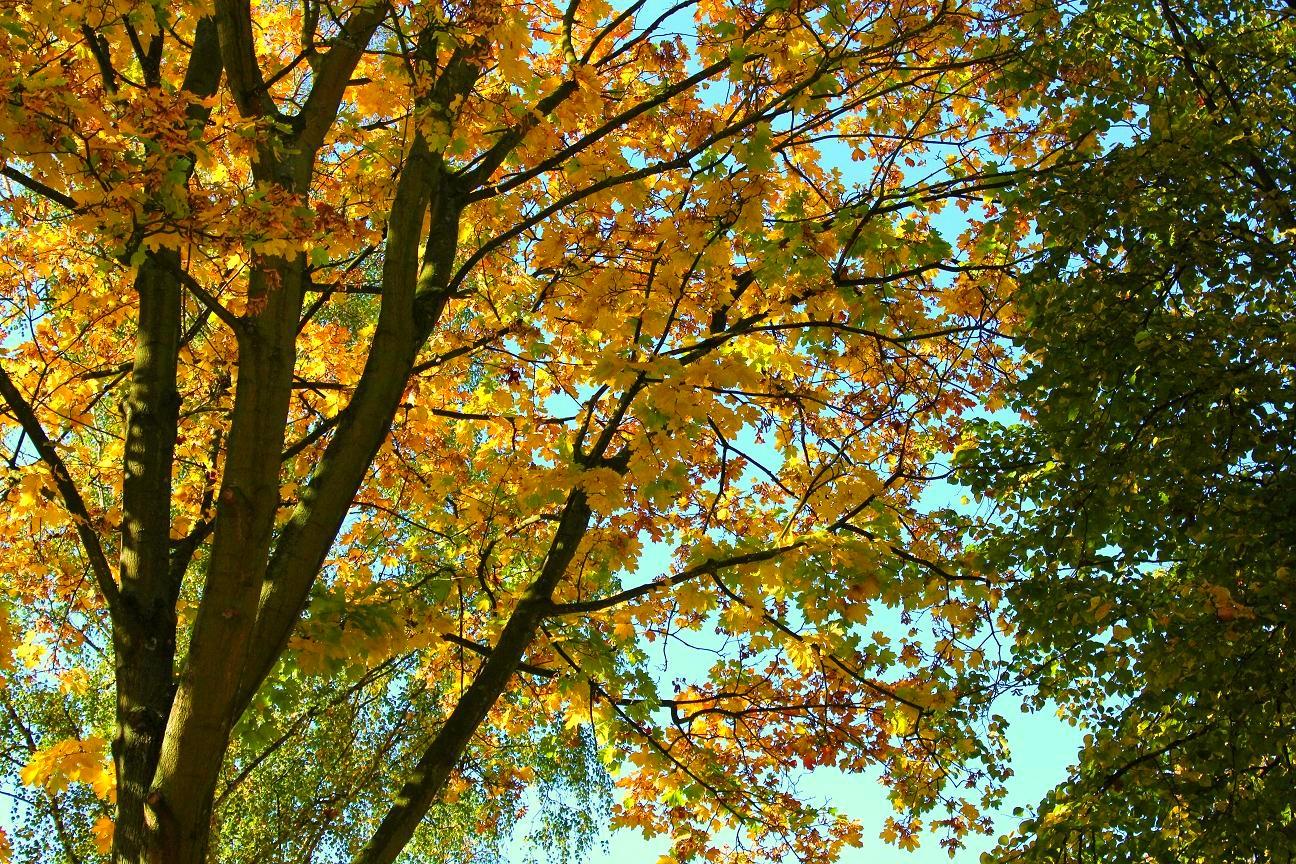 Schnell kommt die Farbe des Herbstes