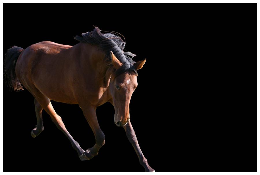 Schnell weg Pferd kommt und guckt böse