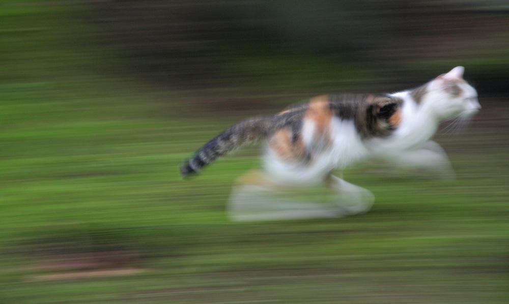 Schnelle Katze