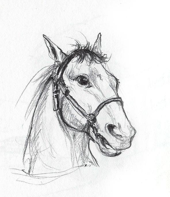 Schnelle Pferde-Skizze