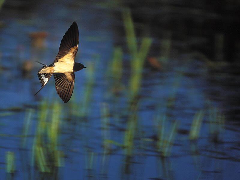 Schneller Flieger