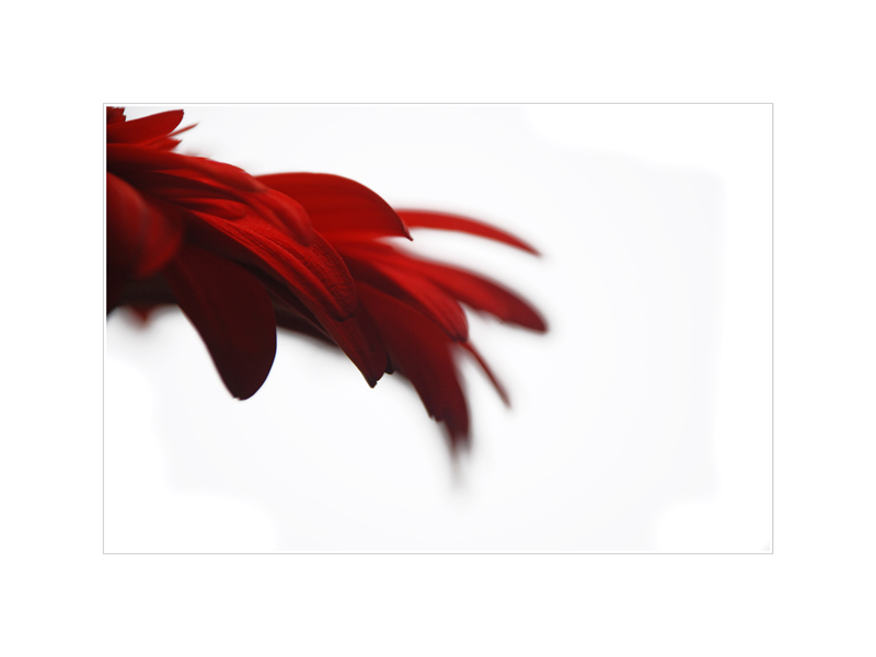 Schnitt-Blume
