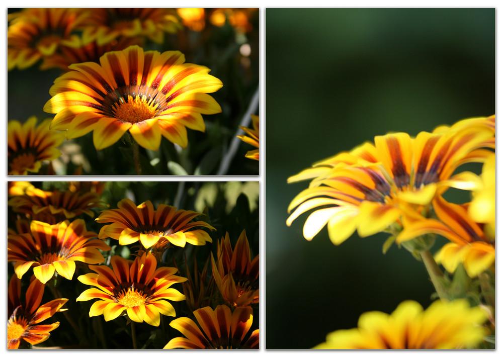 Schnitt Blumen