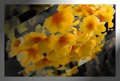 Schnittblumen