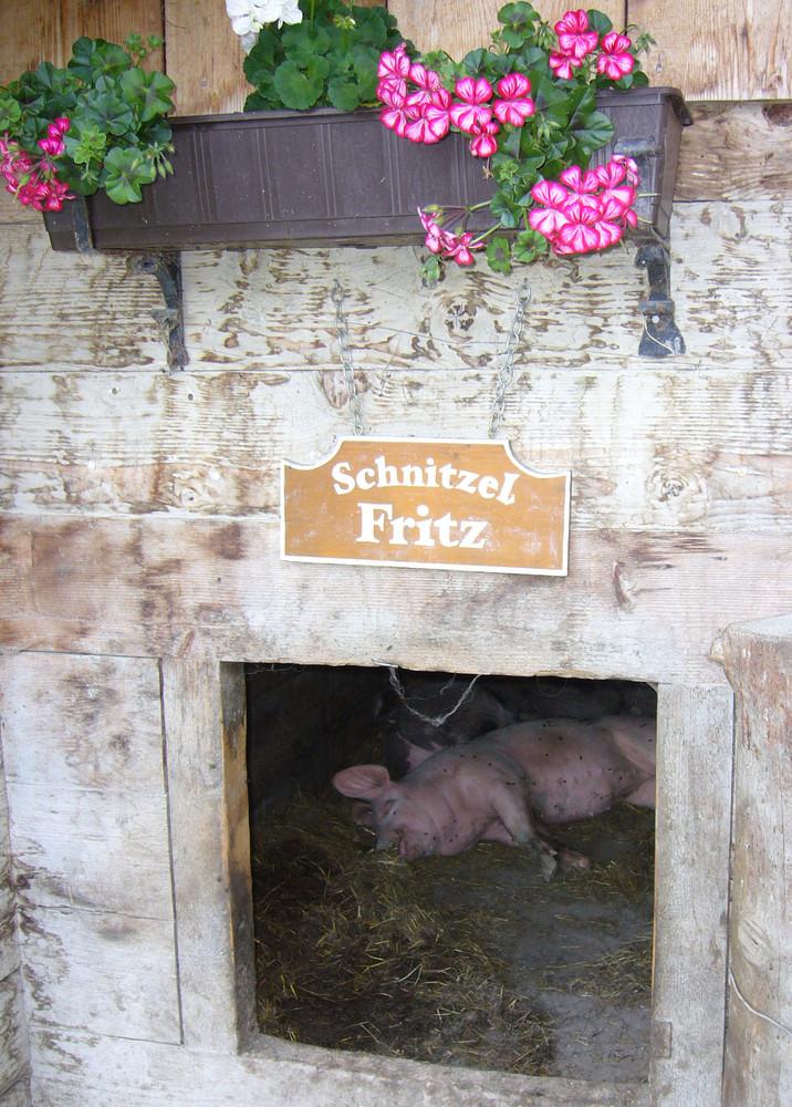 Schnitzel Fritz