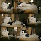 Schnubbel genießt gaaaaanz viel Tagesfreizeit :-))))