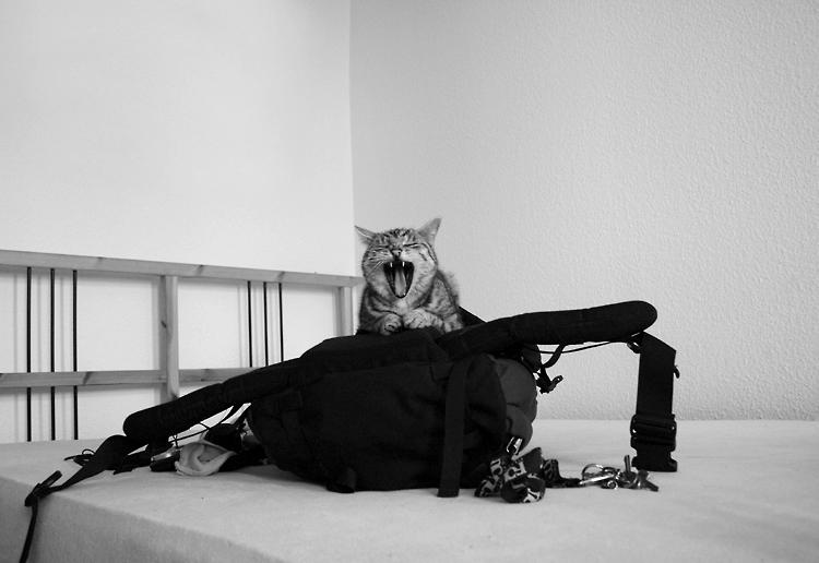 sch n das du wieder da bist foto bild tiere haustiere katzen bilder auf fotocommunity. Black Bedroom Furniture Sets. Home Design Ideas
