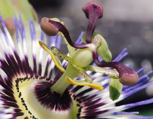 Schön, fantastische Struktur, Heilpflanze.
