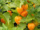 Schön orange...