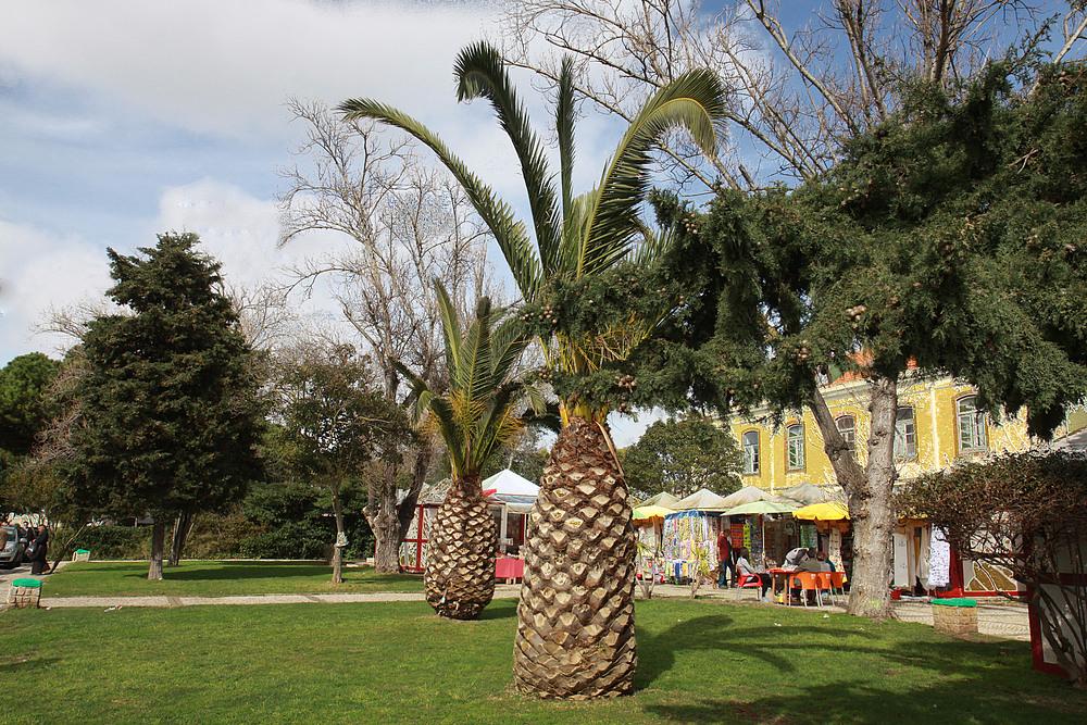 Schön schauen die Palmen aus.