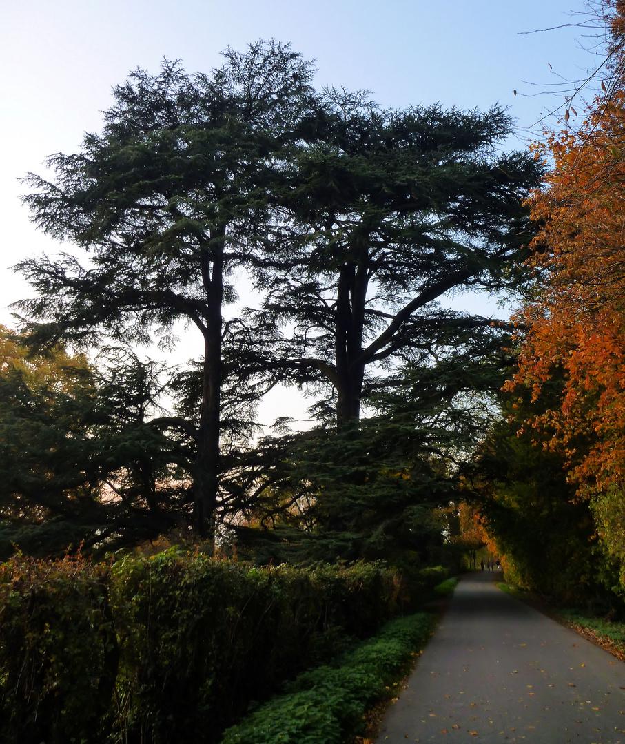 Schön..... sind die Herbstfarben