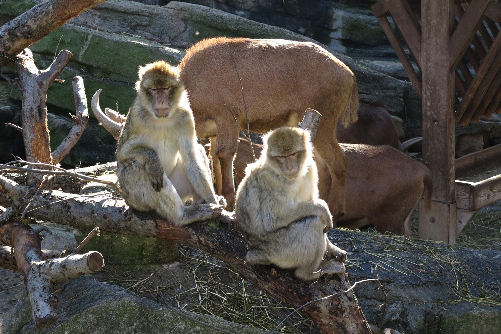 Schönbrunner Zoo-Impressionen 9