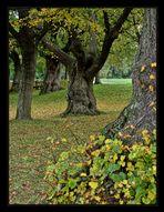 Schöne alte Bäume....