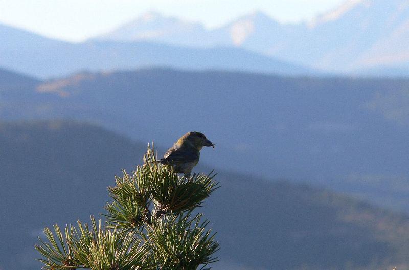 Schöne Aussicht in den Rockies